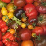 Nos légumes bio du jardin